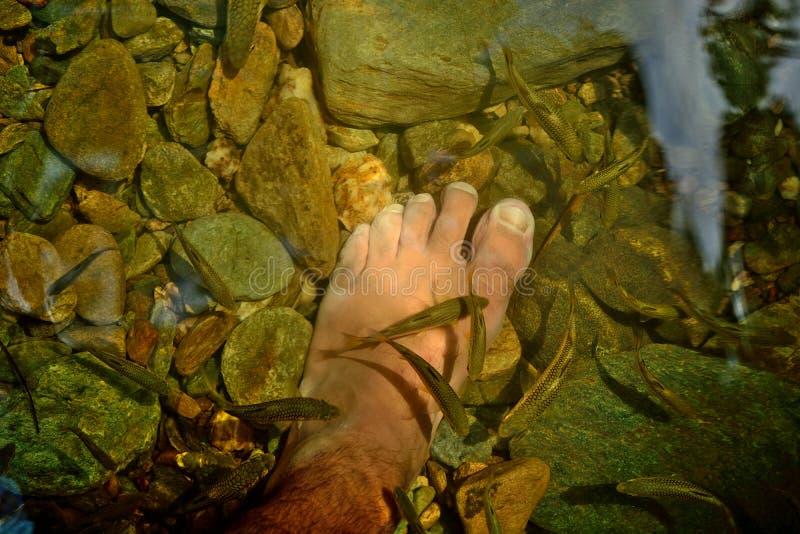 Behandling f?r massage f?r pedicure f?r Rufa Garra fiskbrunnsort tobago arkivfoto
