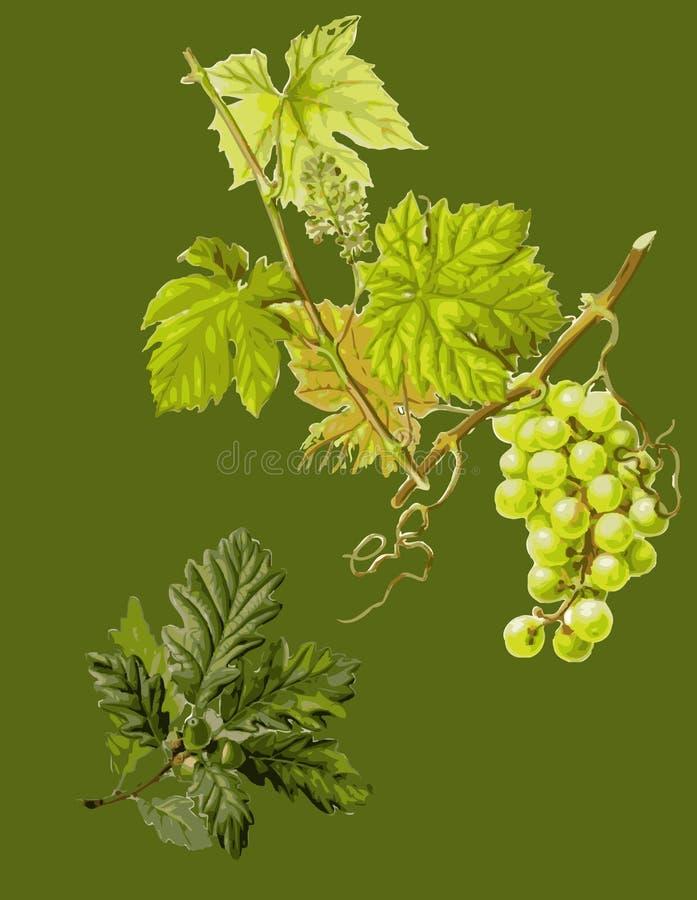 Behang met grapewine. royalty-vrije illustratie