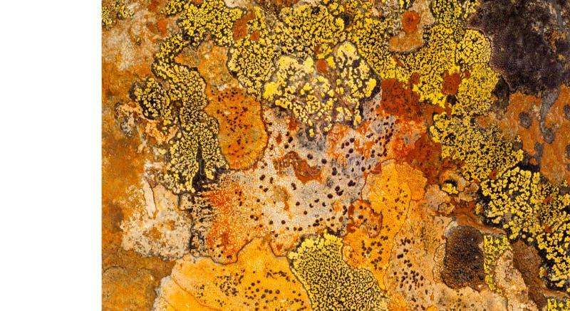 Behang, textuur Het steengraniet is behandeld met kleurrijk mos, stock foto