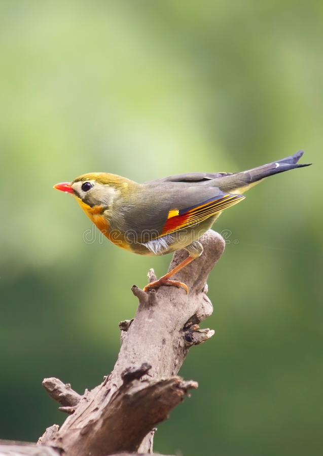Behang: vogel op boomtak