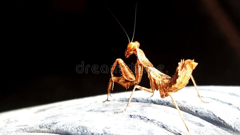 Insect world royalty free stock image