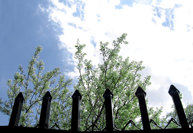 Download Behind The Fence stock image. Image of blossoms, tree, clouds - 113517