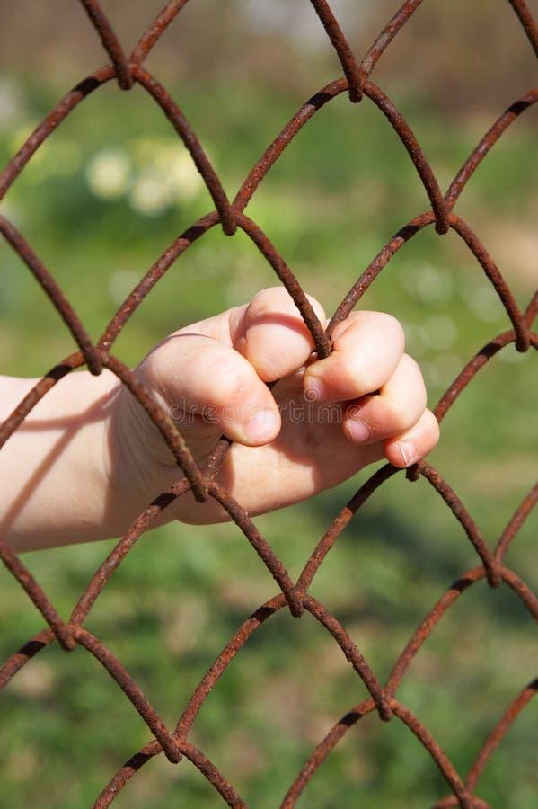 Download Behind lattice stock photo. Image of vertical, child, lattice - 786162