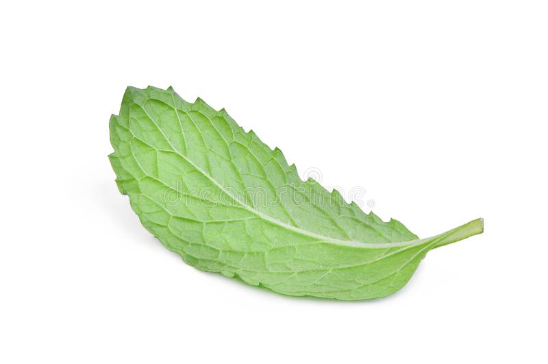 Behind the single fresh mint leaf isolated on white stock image