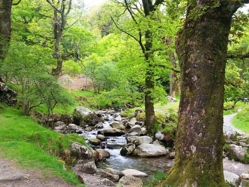 Behoud van biodiversiteit en landschap in de Bergen Nationaal Park van Wicklow royalty-vrije stock foto