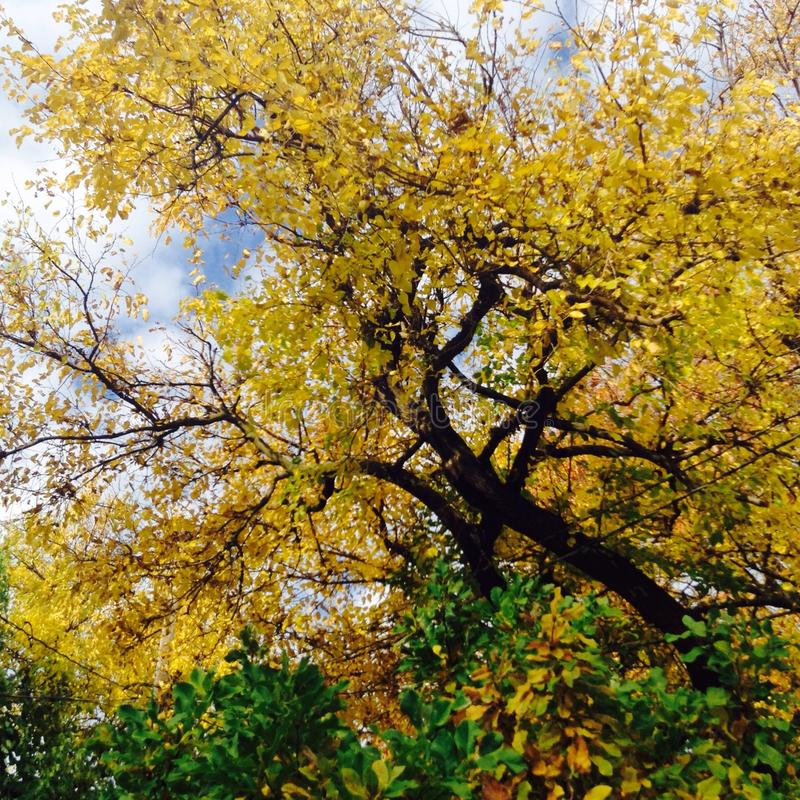 Bei alberi fotografia stock libera da diritti