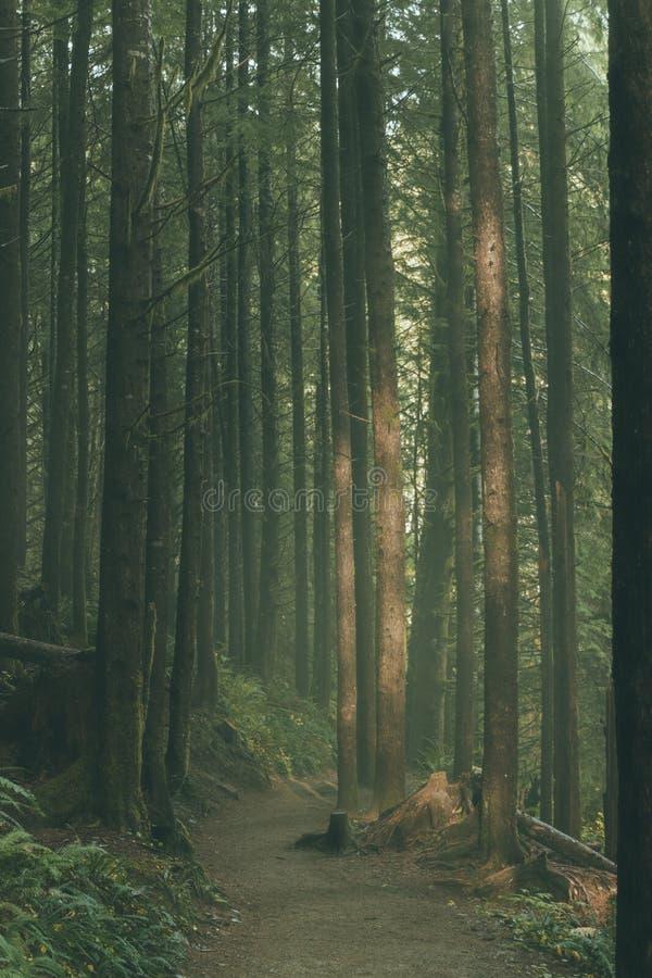 Bei alberi alti in una foresta fotografia stock