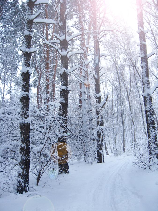 Bei alberi coperti di gelo in parco con i raggi di sole Paesaggio di inverno immagini stock libere da diritti