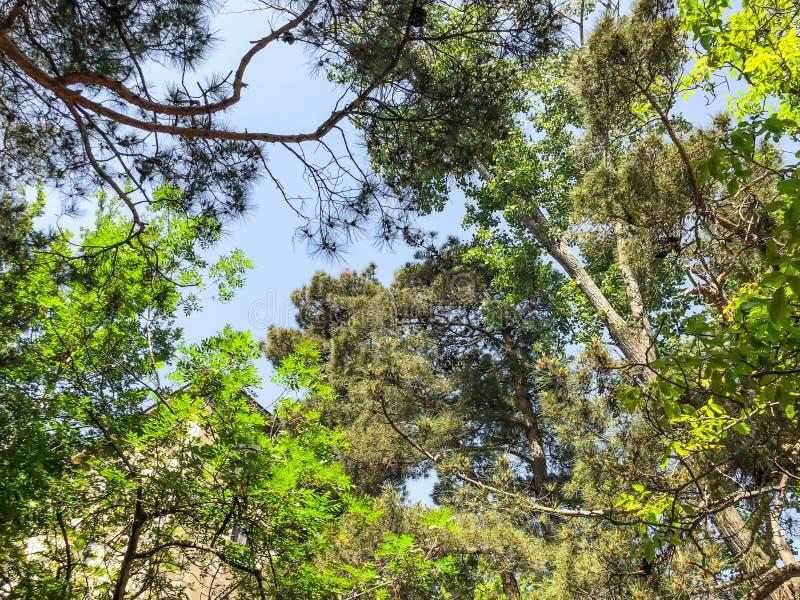 Bei alberi del fiore e del pino nel parco Vista dal fondo alla cima fotografia stock