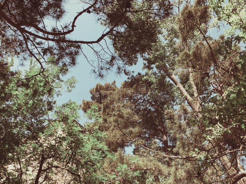 Bei alberi del fiore e del pino nel parco Vista dal fondo alla cima fotografie stock