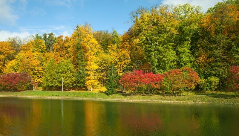 Bei alberi e cespugli di autunno nel parco Alberi variopinti su una banca del lago o del fiume immagine stock libera da diritti