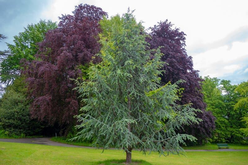 Bei alberi fertili verdi e porpora in parco pubblico con il cielo nuvoloso per fondo fotografia stock