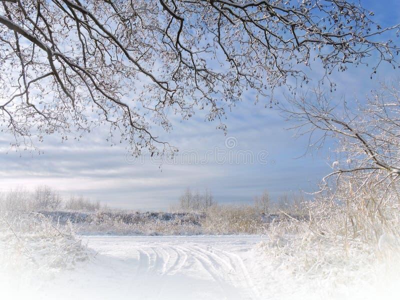 Bei alberi nevosi immagine stock