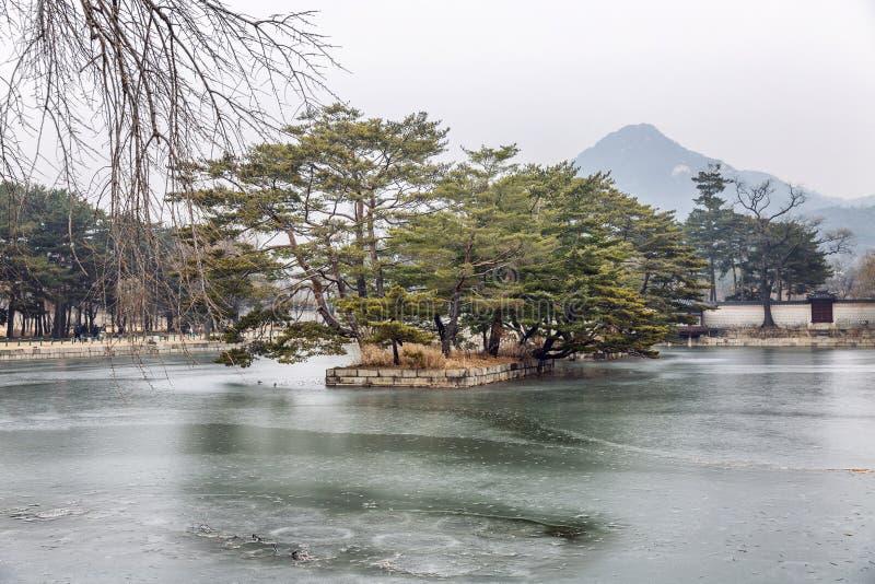 Bei alberi su uno stagno congelato di autunno immagini stock libere da diritti