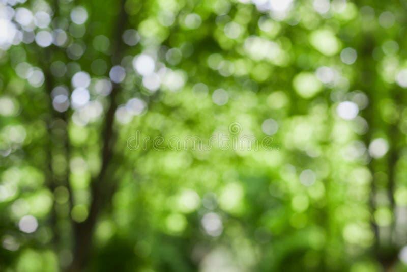 Bei alberi vaghi di estate in parco, fondo verde naturale del bokeh fotografia stock