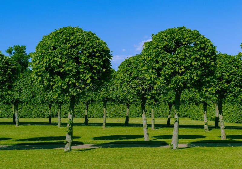 Bei alberi verdi del palazzo immagine stock libera da diritti