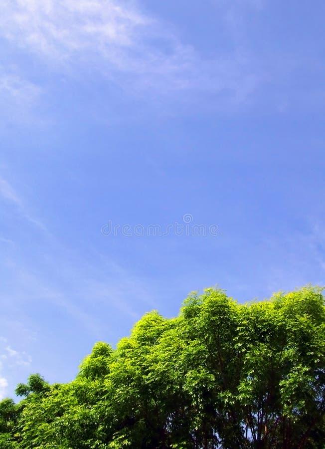 Bei albero & cielo immagini stock libere da diritti