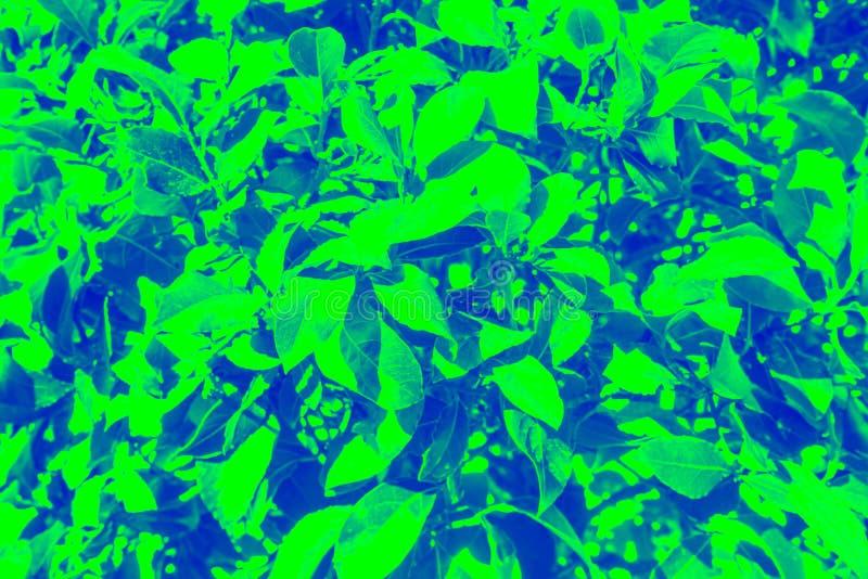 Bei ambiti di provenienza dalle piante fotografia stock libera da diritti