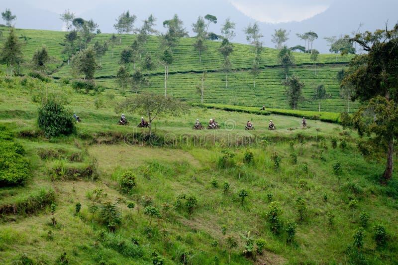Bei azienda agricola del tè e motociclo fotografia stock