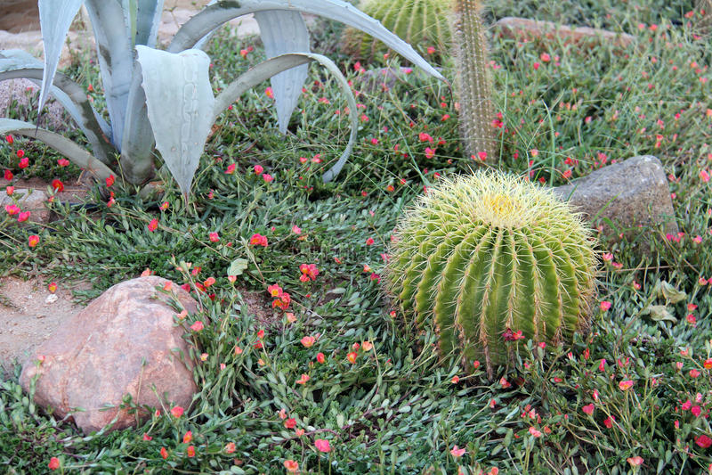 Bei cactus delle specie e delle forme differenti su un letto di fiore con le pietre immagini stock