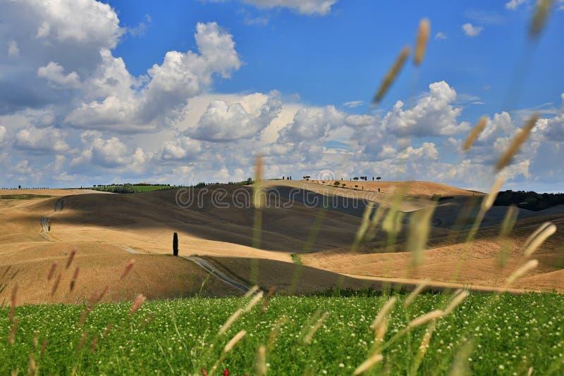 "Bei campi di Toscana in San Quirico d ""Orcia fotografia stock"