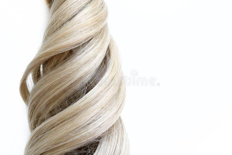 Bei capelli Capelli marrone chiaro I capelli sono riuniti in un panino su un fondo bianco con spazio libero per testo Per un mani immagini stock libere da diritti