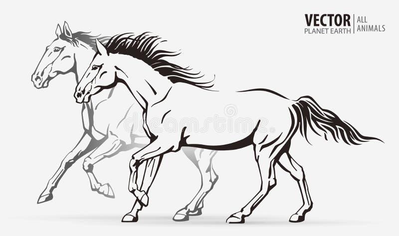 Bei cavalli arabi Siluette dell'cavalli correnti Animale galoppante sport Illustrazione di vettore immagine stock libera da diritti