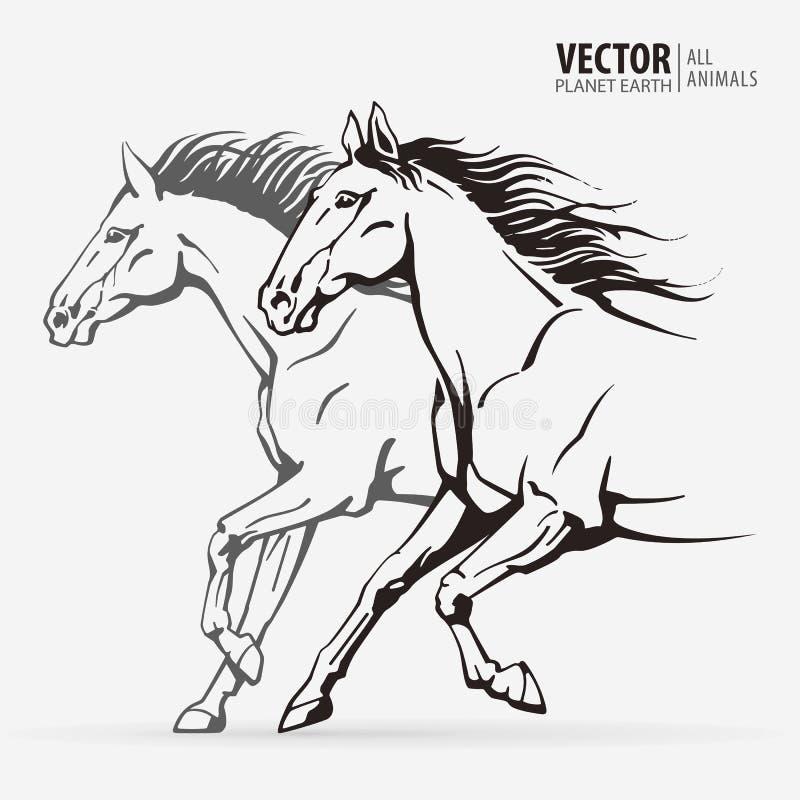 Bei cavalli arabi Siluette dell'cavalli correnti Animale galoppante sport Illustrazione di vettore fotografia stock