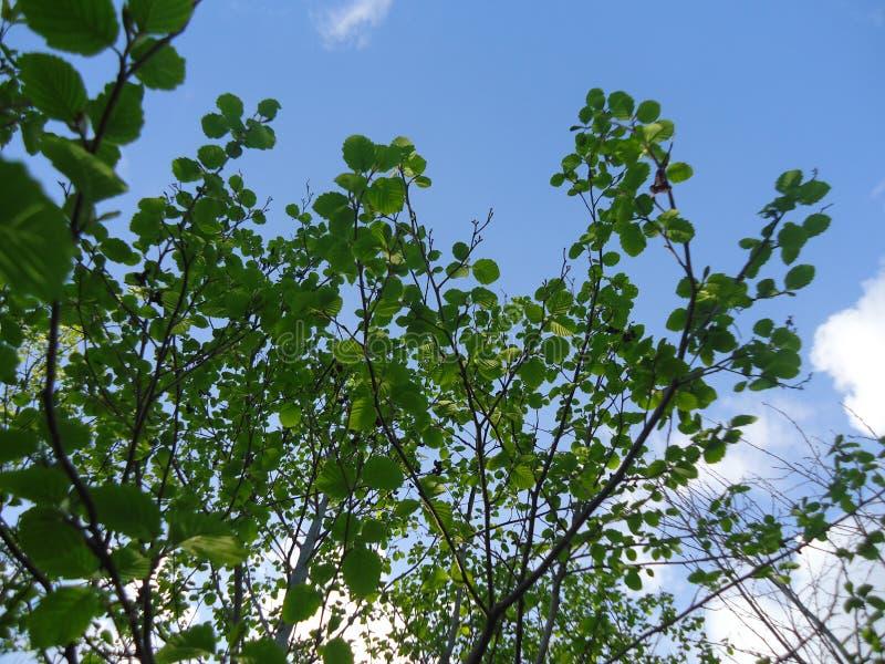 Bei cielo blu e nubi immagini stock libere da diritti
