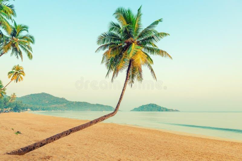 Bei cocchi e spiaggia tropicale fotografia stock