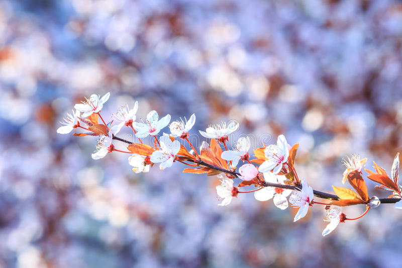 Bei e fiori luminosi di estate fotografie stock