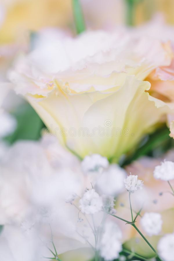 Bei e fiori rosa delicati di eustoma, Lisianthus, genziana di tulipano, eustomas Vicino su, composizione verticale, fuoco seletti immagine stock