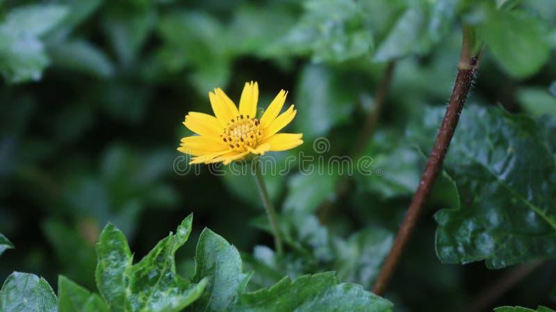 Bei fiore e natura fotografia stock