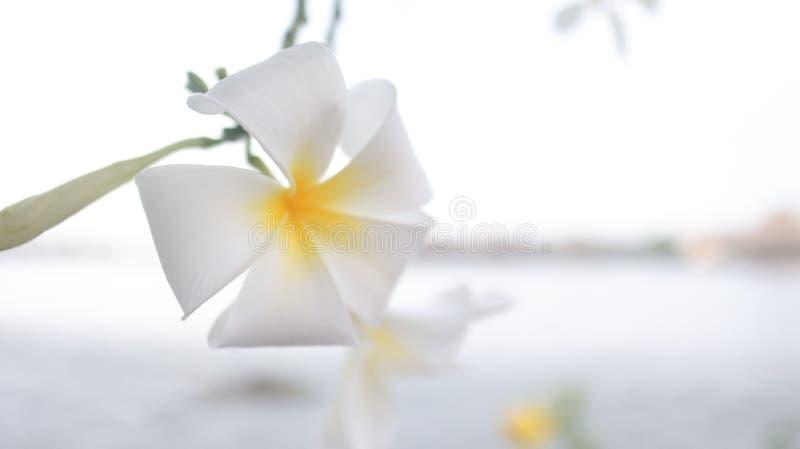 Bei fiore e natura immagine stock