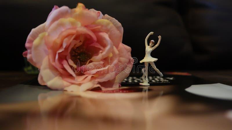 Bei fiore e natura immagini stock libere da diritti