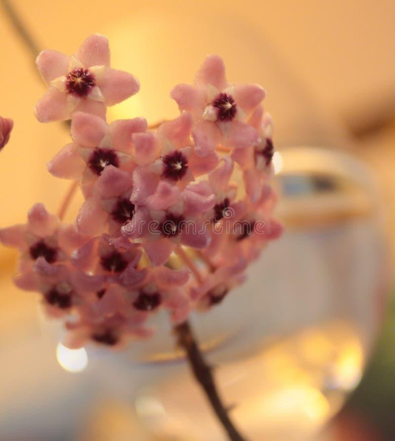 Bei fiore e natura fotografie stock