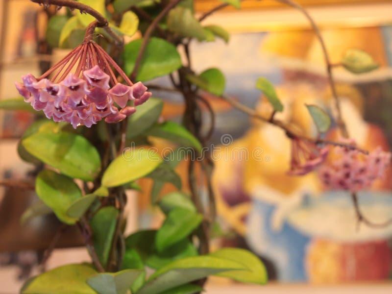 Bei fiore e natura fotografia stock libera da diritti