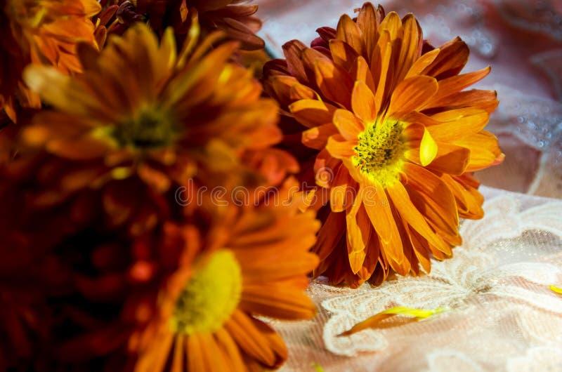 Bei fiori arancio che scintillano al sole fotografia stock