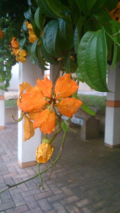 Bei fiori arancioni immagini stock