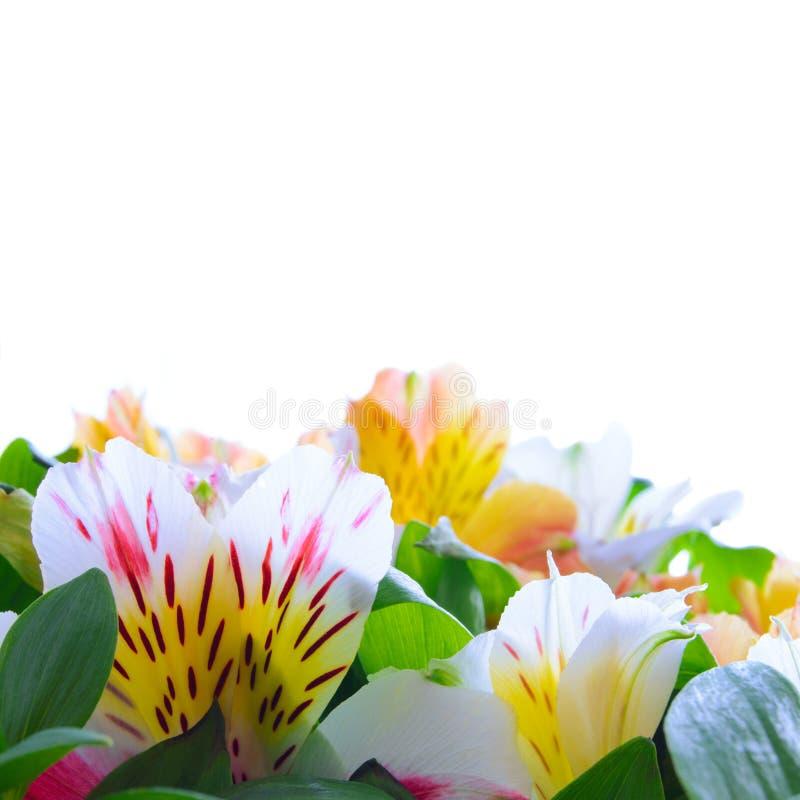 Bei fiori colorati sui precedenti bianchi immagine stock