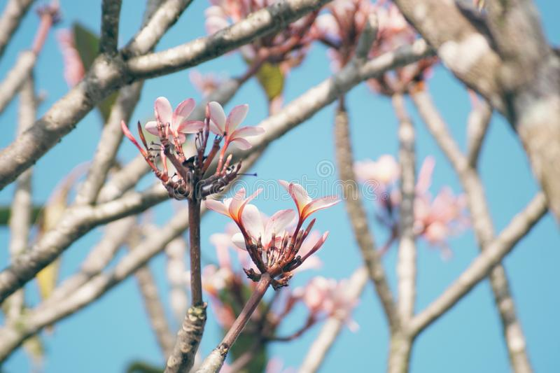 Bei fiori contro il cielo blu fotografie stock libere da diritti