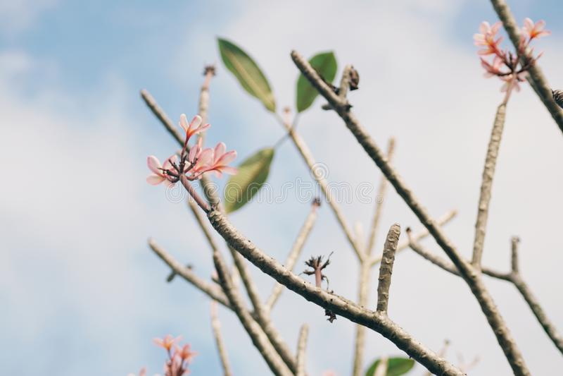 Bei fiori contro il cielo blu immagini stock