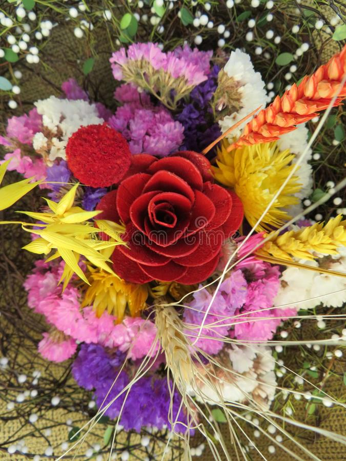 Bei fiori dei colori intensi e di grande bellezza fotografia stock libera da diritti