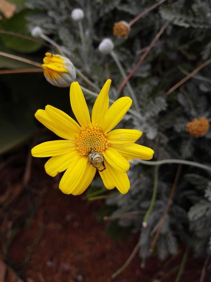 Bei fiori del byme di delevery di morroco immagine stock libera da diritti