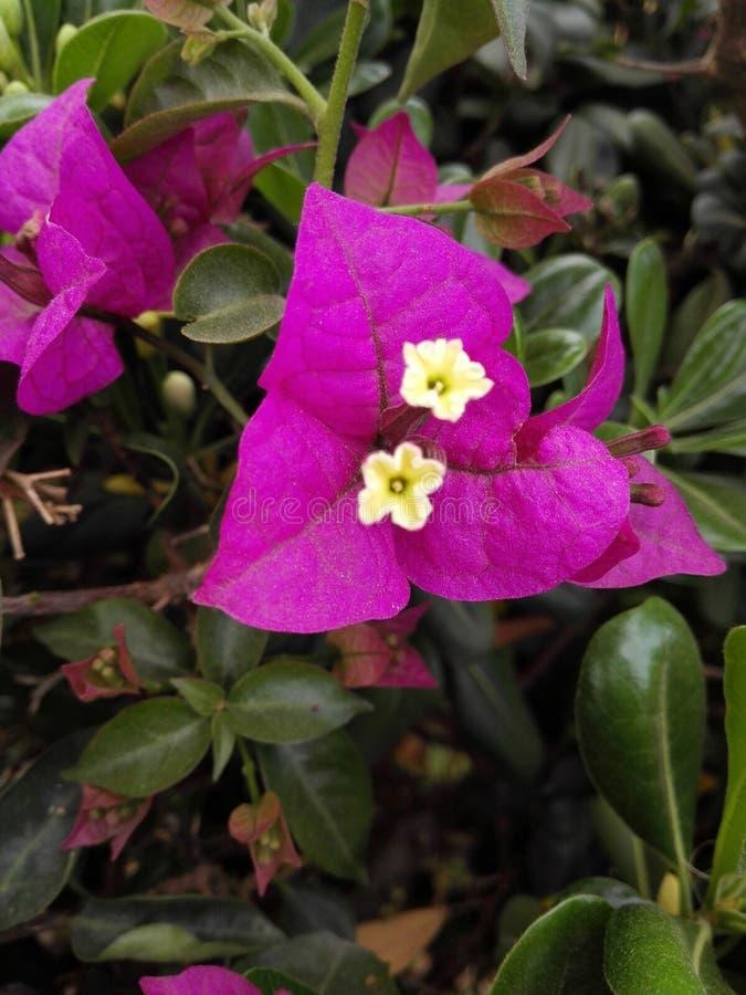 Bei fiori del byme di delevery di morroco fotografie stock