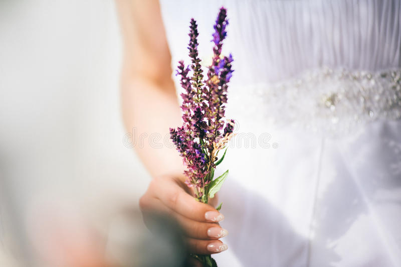 Bei fiori del campo della tenuta della sposa fotografia stock