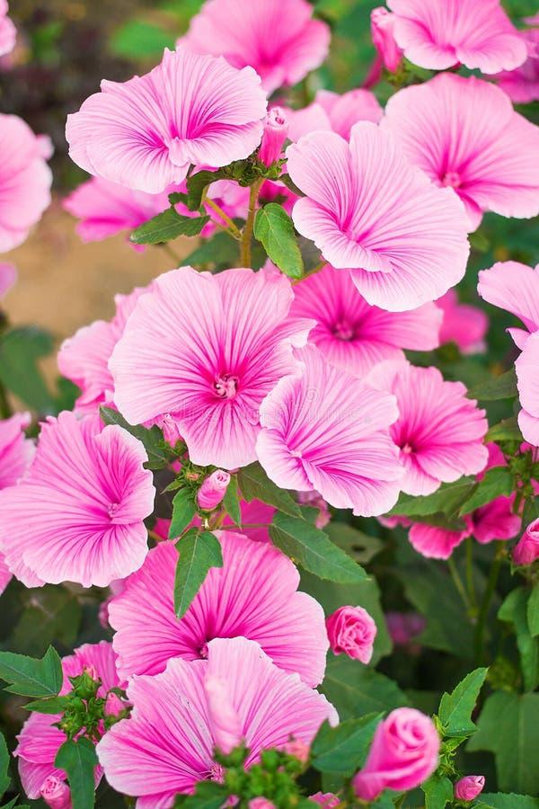 Bei fiori del giardino fotografie stock libere da diritti
