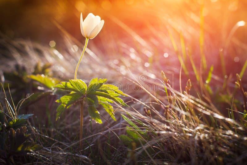 Bei fiori della molla nelle montagne fotografia stock