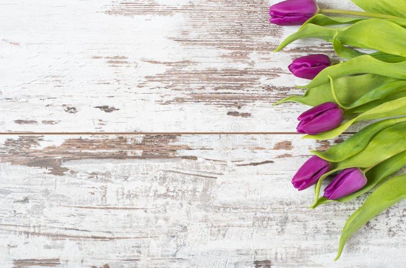 Bei fiori della molla - tulipani porpora su un fondo di legno rustico leggero Struttura floreale con i fiori sbalorditivi Copi lo immagini stock