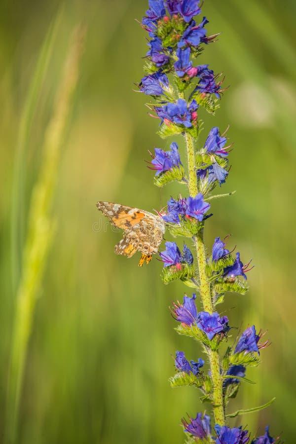 Bei fiori della molla in un prato eliminante di legno con la farfalla su  immagini stock